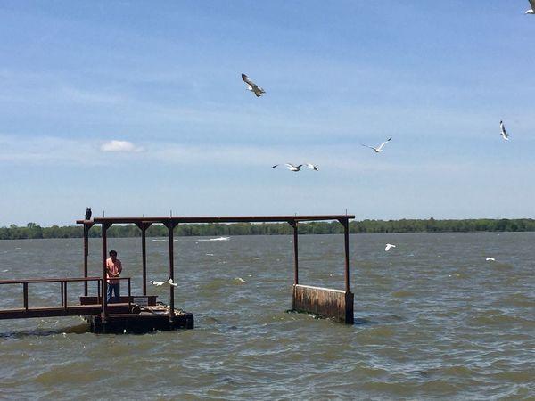 Water Flying Animal Wildlife Animals In The Wild Bird Animal Vertebrate