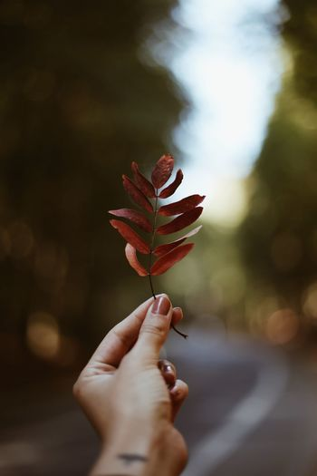 Autumn The Week on EyeEm Autumn Leaf Human Hand Hand Human Body Part Holding One Person Plant Finger Close-up Real People Body Part Focus On Foreground Nature Outdoors Day