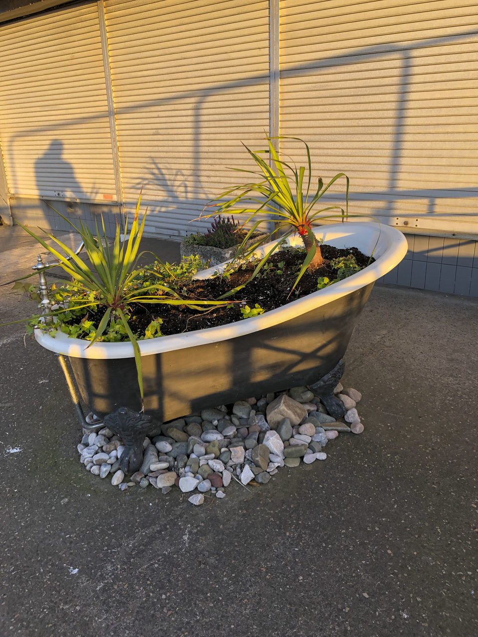 POTTED PLANT ON STONE WALL