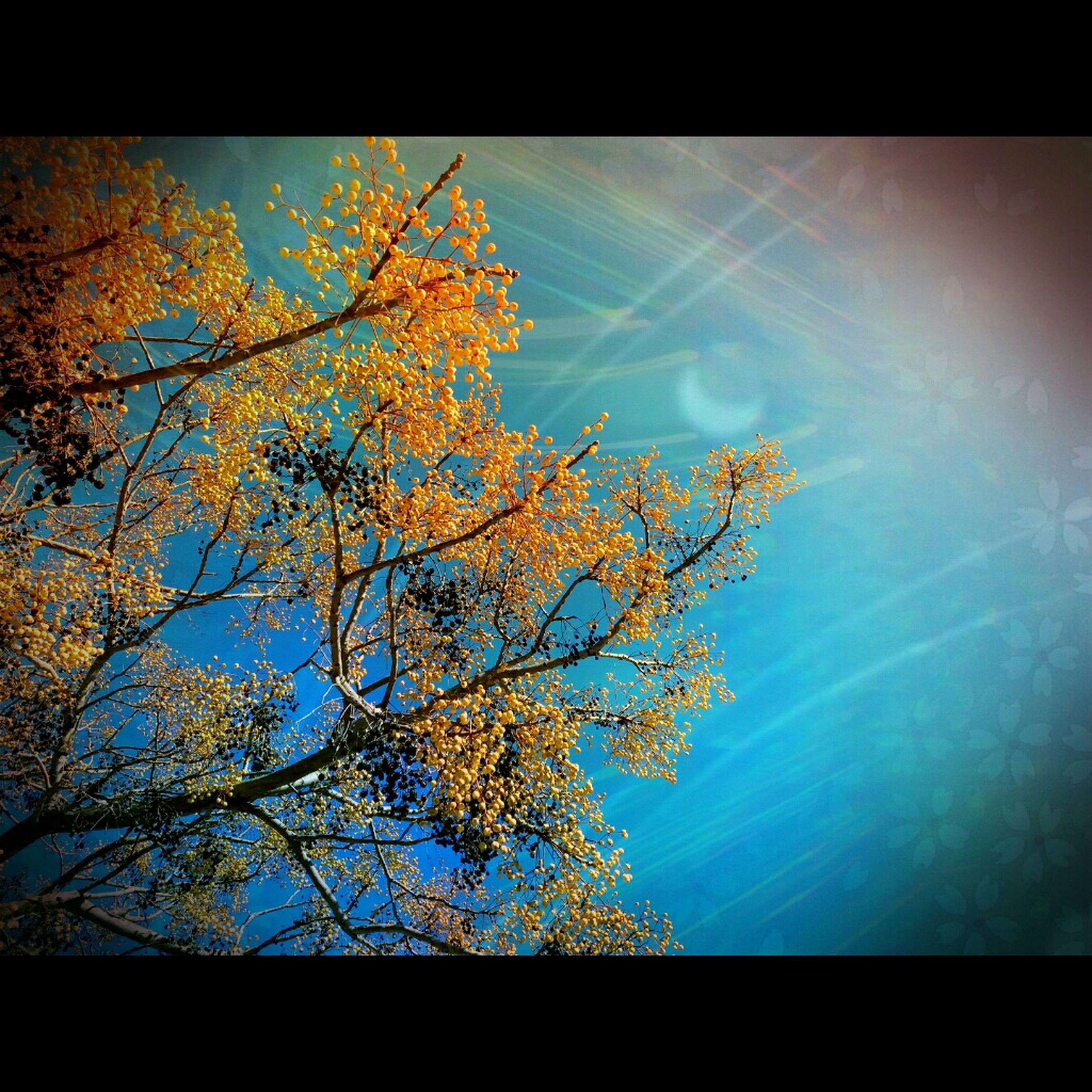 tree, autumn, nature, change, low angle view, sky, beauty in nature, growth, branch, no people, outdoors, day, close-up
