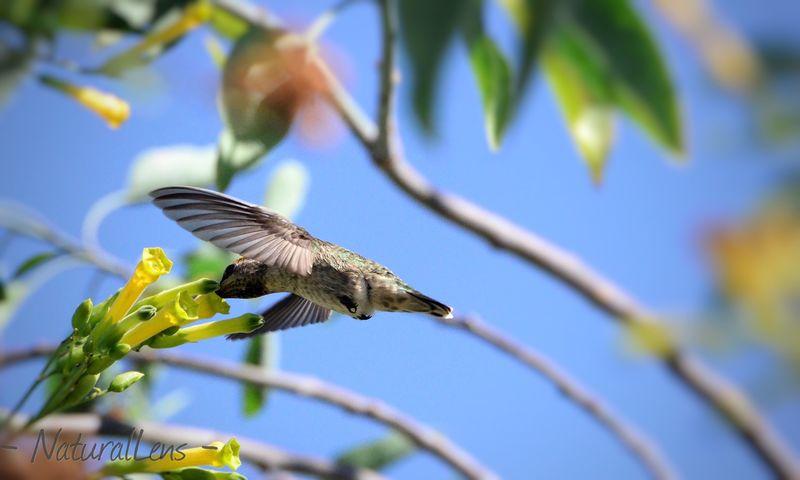 The refuling station. Birds Humingbird Beutiful  Nature BirdLovers