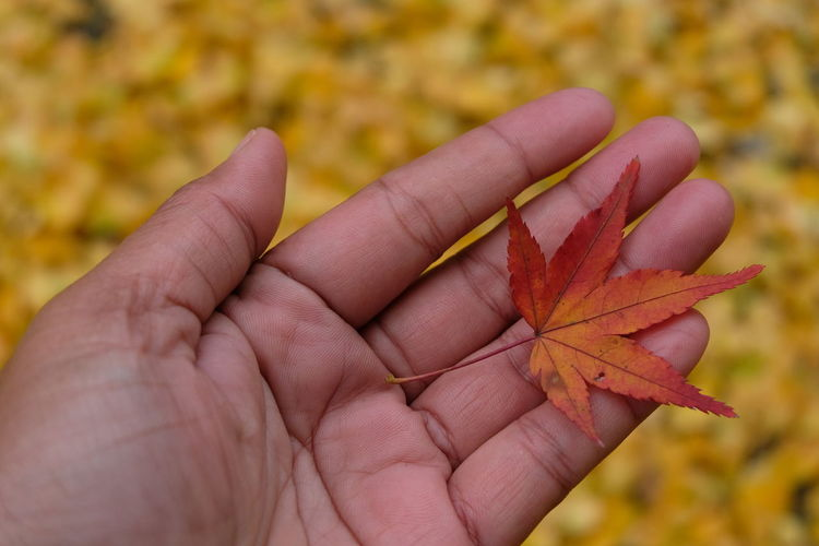 Cropped hand holding autumn leaf