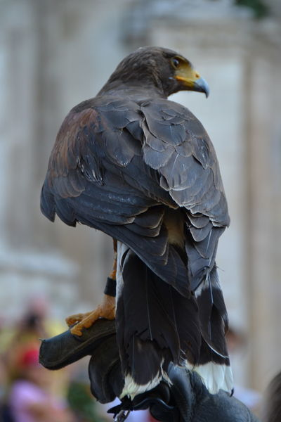 Bird Animal Wildlife Perching Animals In The Wild One Animal No People Close-up Nature Outdoors Day Art Is Everywhere Beauty In Nature Animals In The Wild Traditional Festival Tradition Sulmona Giostra Cavalleresca Sulmona TCPM Break The Mold