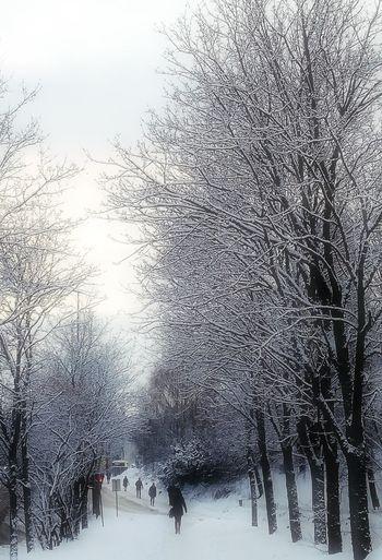 'Home..' KJ✨ Winter Snow Tree Nature Snow Outside Urban Winter Wonderland Beauty In Nature