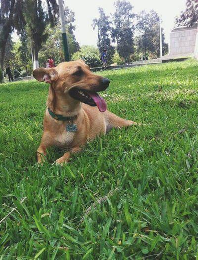 Lima-Perú Gorditaybonita Valentina Dog