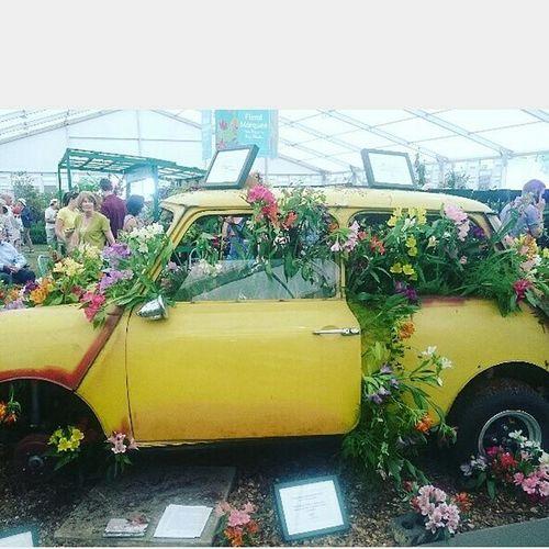 Hampton Court Palace Hamptoncourtpalacegardens Plant Flower Yellow Land Vehicle