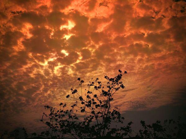 Wonderful evening Tree Sunset Beauty Silhouette Dramatic Sky Sky Landscape Cloud - Sky Shining Romantic Sky
