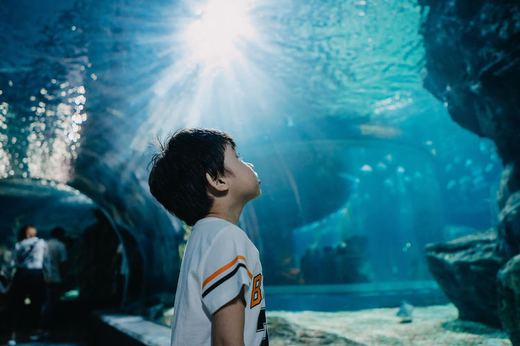 Rear view of boy looking at fish in aquarium