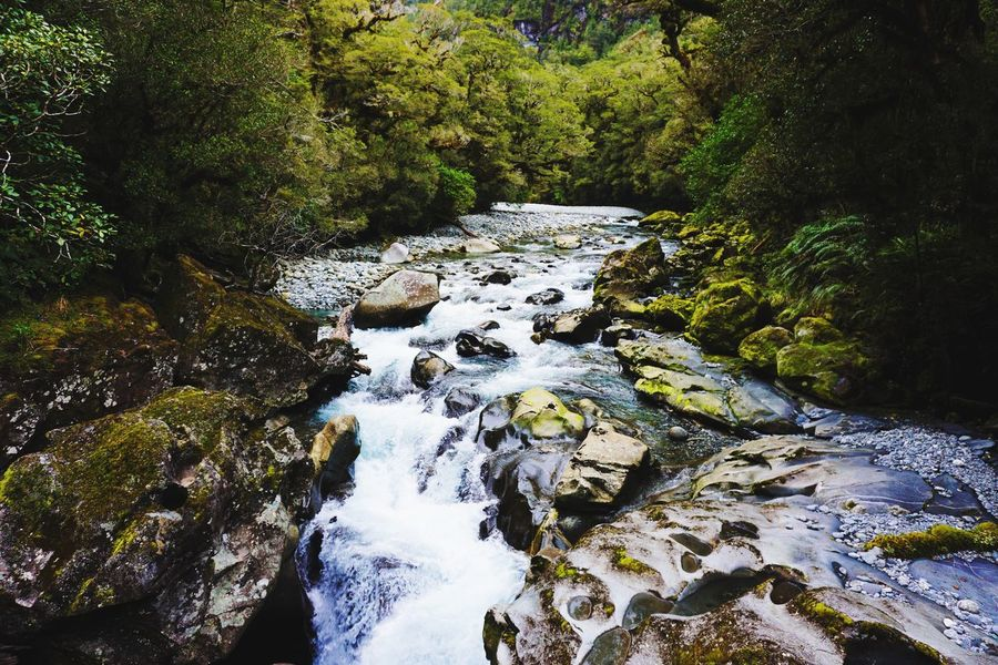 River National Park Fiordland National Park Fiord Flowing Water Rock - Object Forest Scenics - Nature River Motion