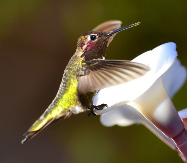 Life is a constant balancing act. Hummingbird Awesome_shots Nikon D3100 Nikon