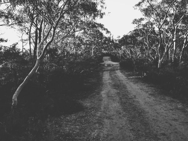Dirt road in the bush. Blue Mountains, New South Wales, Australia. Tree Forest Nature Outdoors No People The Way Forward Day Tree Area Beauty In Nature Nature Landscape New South Wales  Australia Road Hiking Adventure Black And White Dirt Road