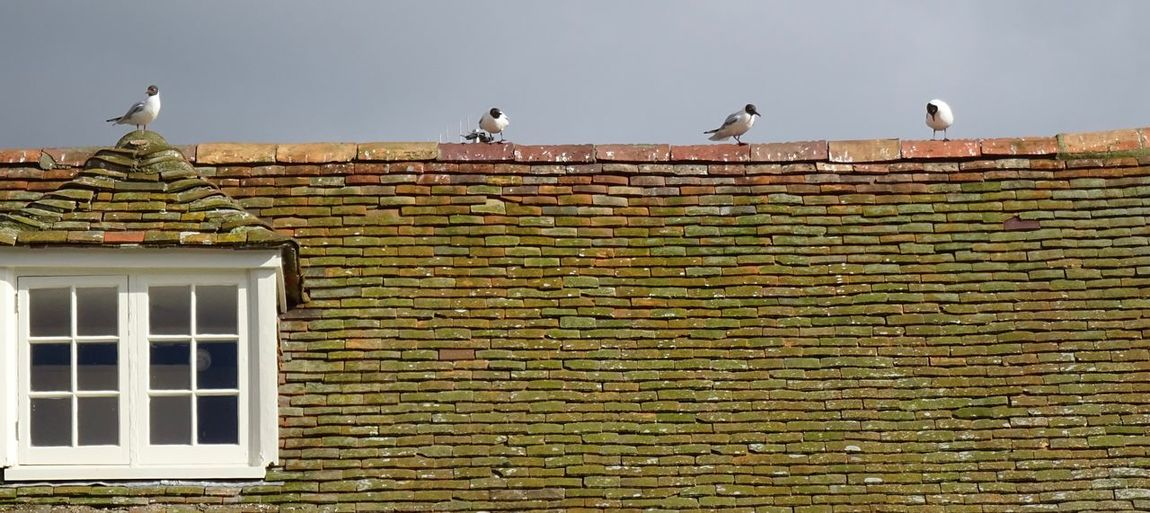 Low angle view of seagull perching on brick wall of building