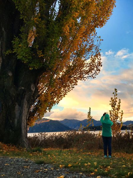 Leisure Activity Taking Photos Taking Pictures Rear View Lifestyles Landscape Traveler Sunset Sky Beauty In Nature Standing Tranquil Scene Outdoors Women Before Sunset Wanakalake New Zealand Wanaka New Zealand Tree Nature Mountain One Woman Only Autumn Leaves Autumn Colors Autumn