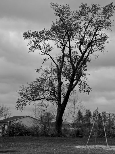 B&W Collection Tree Silhouettes Tree Sky Plant Cloud - Sky Field Nature Land Day Tranquility Beauty In Nature No People Growth Tranquil Scene Landscape Outdoors Environment Scenics - Nature Non-urban Scene Grass Branch