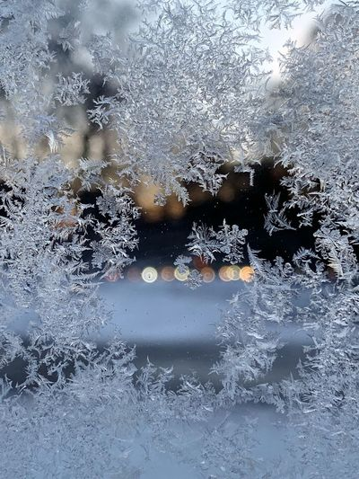 When you waiting for the bus in winter Russian Winter Lights Natural Pattern Hoarfrost Rime Window Winter Wintertime Frozen Full Frame Window No People Winter Backgrounds Glass - Material Frozen Nature Pattern Close-up Cold Temperature Abstract Glass Ice Abstract Backgrounds Snowflake