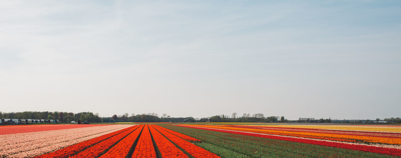 Agriculture Beauty In Nature Copy Space Day Environment Field Flower Growth Land Landscape Multi Colored Nature No People Outdoors Plant Red Running Track Rural Scene Sky Tranquil Scene Tulip