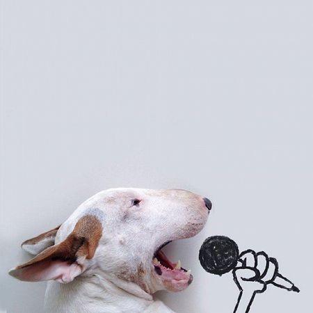 Dog Singstar Nice Cute LOL