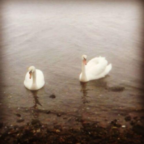 Mister og miss Swag! Swag Swaggy Swanes Swan baretull tullball superkul melsomvgs melsomvik naturbruk kjempegøy fisketur påliksom @emiliehanssen97