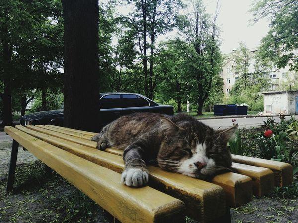 Trees Suburbia Summer Heat Relaxing Cat Sleepy