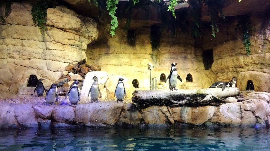 Good life Animal Themes Nature Water Bird Beauty In Nature No People Aquarium Aquarium Photography Penguins Penguinlife Goodlife Dubai Mydubai