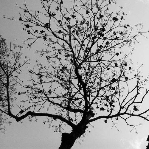 Autumn Tree Abandoned Betrayed Leaves MissingInAction Sodull Gloomy Spooky Tall Bigtree Sad Hope Springiscoming Waitforit Driedleaves Fallenleaves Instadaily Instanature Instaempty