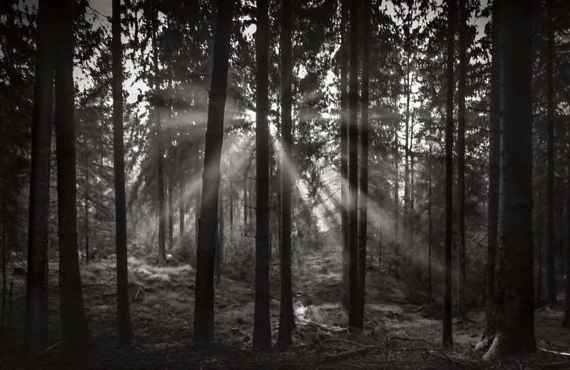 Tree Forest Nature Tree Trunk WoodLand Tranquility Outdoors Scenics Landscape Beauty In Nature Tranquil Scene No People Day Tree Area Tranquility Landscape_photography EyeEm Best Shots - Nature EyeEmBestPics EyeEm Nature Lover EyeEm Best Shots EyeEm Best Edits EyeEm Best Shots - Black + White Beauty In Nature Blackandwhite Photography Blackandwhite
