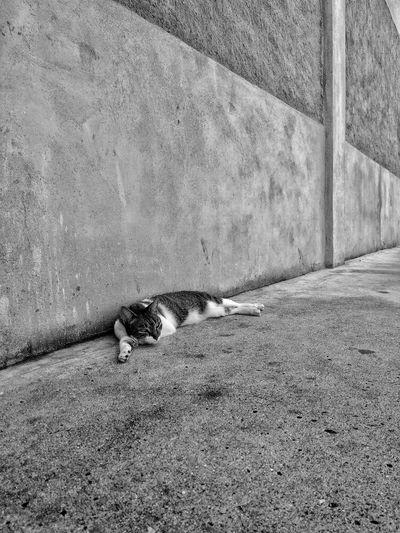 One Animal Wall