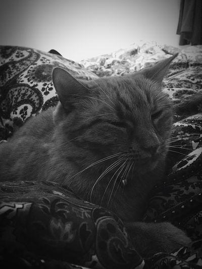 My sweet baby ❤️