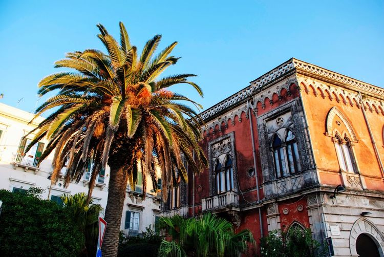 Façade Shabby Old Red Syracusa Palazzo Houses Italy Italian Sicily Sicilia Architecture Low Angle View Building Exterior Sky Built Structure Tree Plant Palm Tree No People Day Building Outdoors Clear Sky