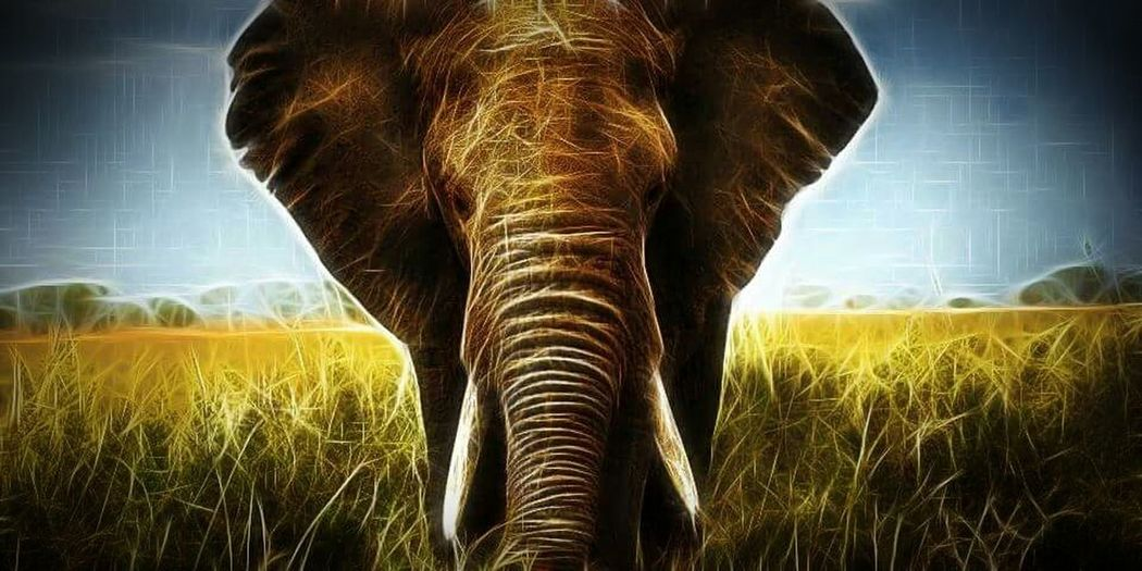 Matriarch Elephant Fractalius Fractaliart Not My Pic Processed Image Nature Natural Beauty Old And Wise Beautiful Creature