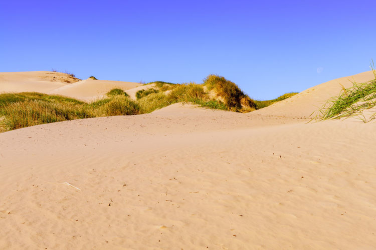 The dunes on