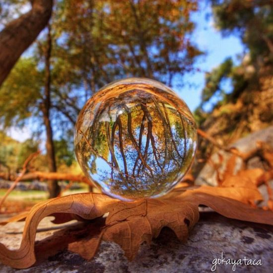 How's The Weather Today? Autumn Leaves Tree_collection  Sphere Izmir Hdr_Collection