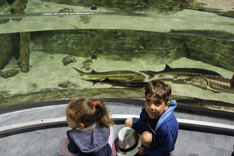 Aquarium Photography Aquarium Vacation EyeEm Selects Child Childhood Boys Road Togetherness Children