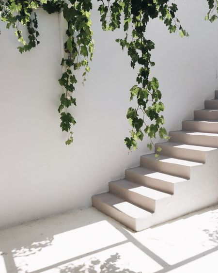 EyeEmNewHere EyeEm Selects Minimalism Minimal Minimalist Architecture Travel Destinations EyeEm Selects EyeEm Best Shots Cyclades EyeEmNewHere Vacations Staircase Plant Steps And Staircases No People Nature Architecture Day