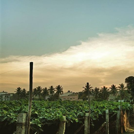 Painted sky over a cabbage farm. Bangalore Planetwanderlust Passionpassport Outdoors Modernoutdoorsman Igers Picoftheday Likeforlike Like4like Liveauthentic Livenature Travelling ExploreEverything Wanderfolk Wanderlust Vscoindia VSCO Nothingisordinary Instalove Instagood Instago Farmersmarket Farmstead Earthfocus Travelgram oneplustwo