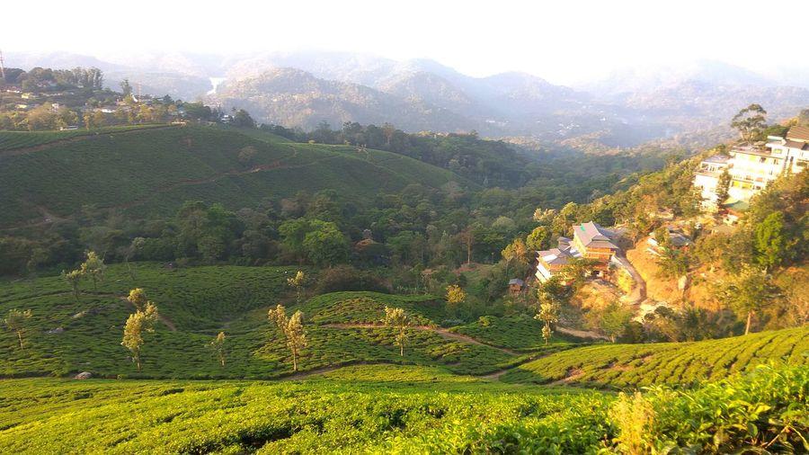 Agriculture Landscape Nature Munaar Kerala Teafarm
