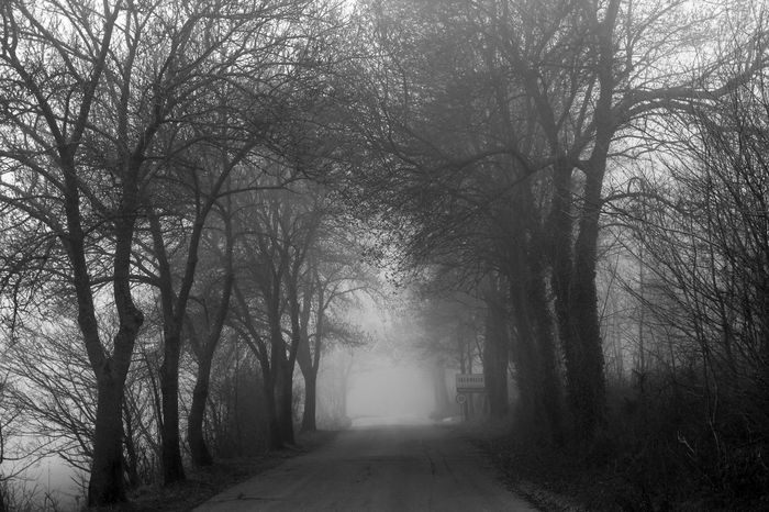 Bare Tree Beauty In Nature Blackandwhite Branch Day Fog Forest Monochrome Nature No People Outdoors Road The Way Forward Tranquility Tree