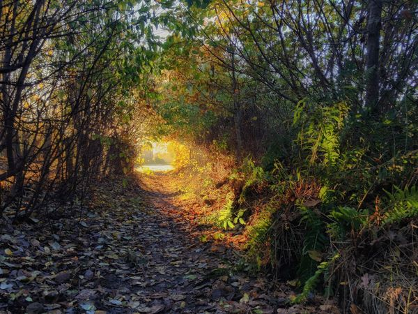 There is a light at the end of the tunnel - Tunnelvision Tranquil Scene Forest Leaf The Way Forward Outdoors Beauty In Nature Day Tranquility