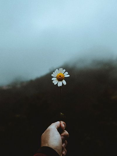 Flowering Plant Flower Human Body Part One Person Human Hand Body Part Hand Nature Beauty In Nature Outdoors Lifestyles 2018 In One Photograph The Minimalist - 2019 EyeEm Awards