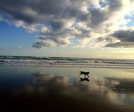 EyeEm Best Shots EyeEm Nature Lover Life Is A Beach Dog Silhouette Beach Eye4photography  IPhoneography Skyporn Sky