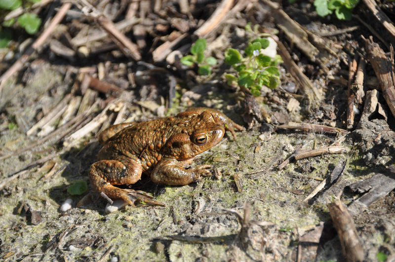 Close-up of frog on field in forest