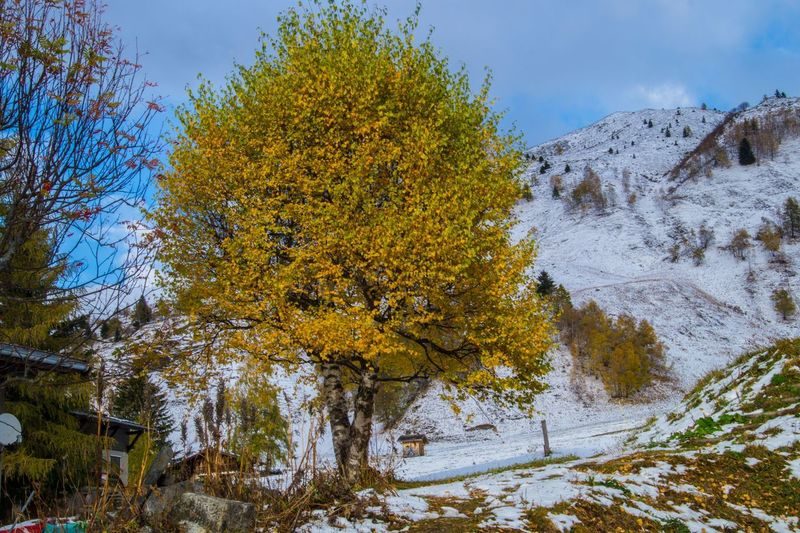 le tour,chamonix,haute savoie,france Tree Winter Beauty In Nature Plant Cold Temperature Snow Nature No People Day Tranquility Autumn Scenics - Nature Growth Change Sky Tranquil Scene Non-urban Scene Covering Outdoors