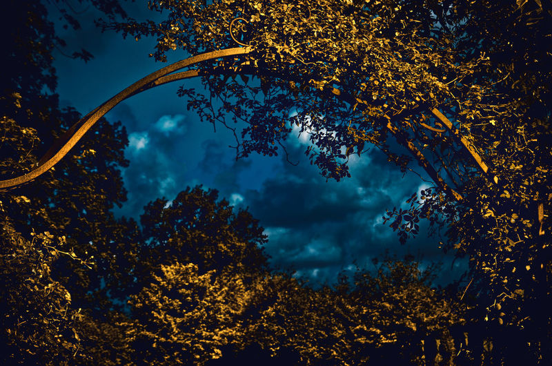 Gateway to the world Dream Dreaming Nature Autumn Beauty In Nature Blue Branch Change Cloud - Sky Growth Hedge Leaf Low Angle View Nature No People Orange Color Outdoors Plant Plant Part Scenics - Nature Sky Surreal Tranquil Scene Tranquility Tree Tree Canopy