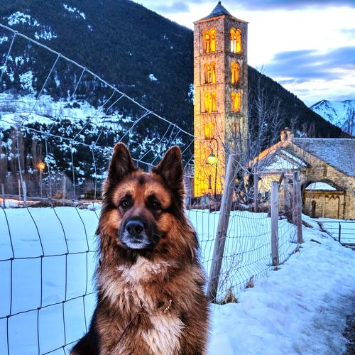 Good Guy Snow Cold Temperature Winter German Shepherd Weather Dog Protection Animal Themes No People Mammal Snowing Sky Pets Outdoors Domestic Animals Nature Day EyeEmNewHere