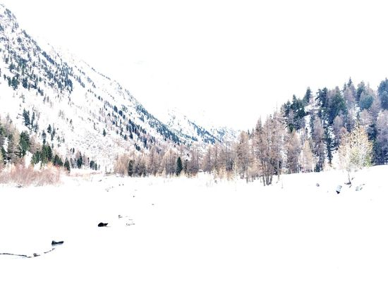 Pastel Power Pastel Colors Nature WhiteCollection Winter Winterlandscape Naturelovers White White Color Snow Landscape_photography Landscape_Collection Alpen Quiet Moments Winterlandschaft