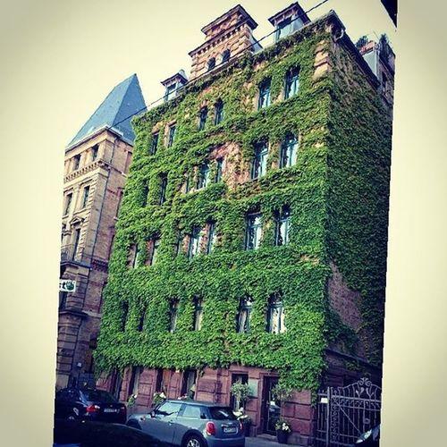 Green Stuttgart :-D Houseingreen House Stuttgart Lategram Instagram Instamood дом лето Sun Summertime