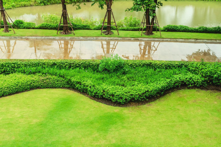 Green lawn,