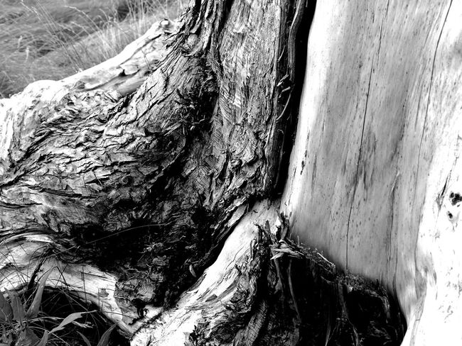Part of a tree trunk B/W edit B/w B/w Collection B/w Daily B/w Nature B/W Photography Beauty In Nature Day Daytime Eye Em Scotland Natural Pattern Nature Nature Photography Nature_collection No People Outdoors Riverside Riverside Photography Rough Scotland Textured  Tree Trunk Uk Walking Walking Around Walks