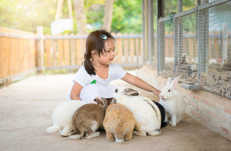 Cute girl playing with rabbits by cage