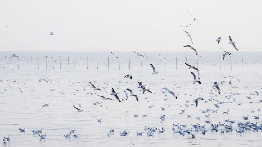 Flock of birds flying over sea against sky